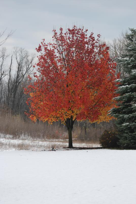 Some Years we even get snow with Fall Color